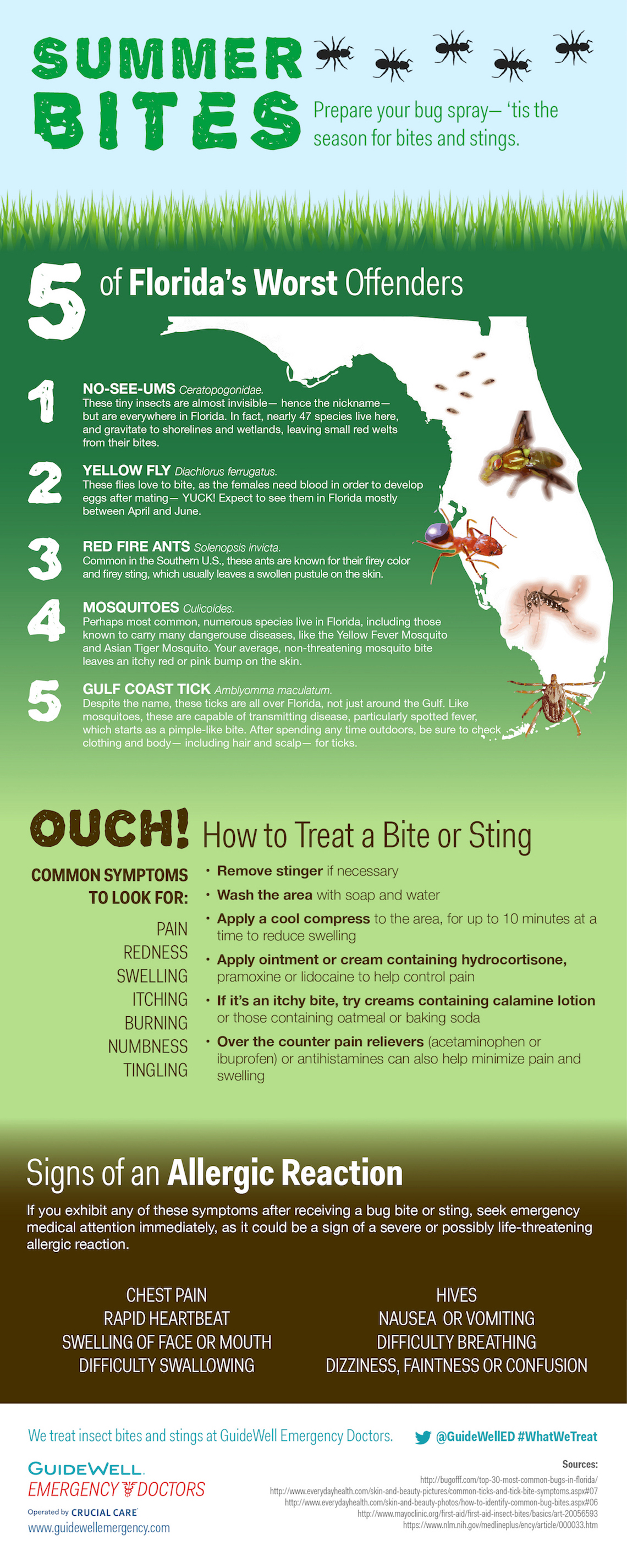 How to treat insect bites infographic